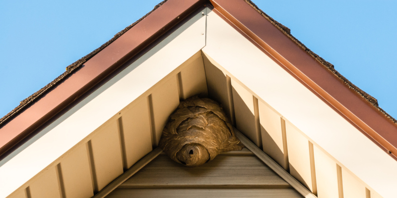 reach a honey bee removal team for help