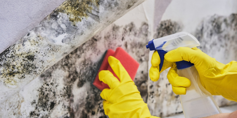 mold removal is probably at the top of your mind