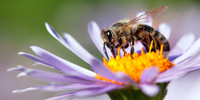 you are looking for honey bee removal options