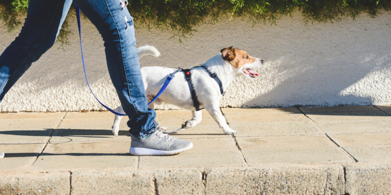 These are three things you want to remember when it comes to dog training
