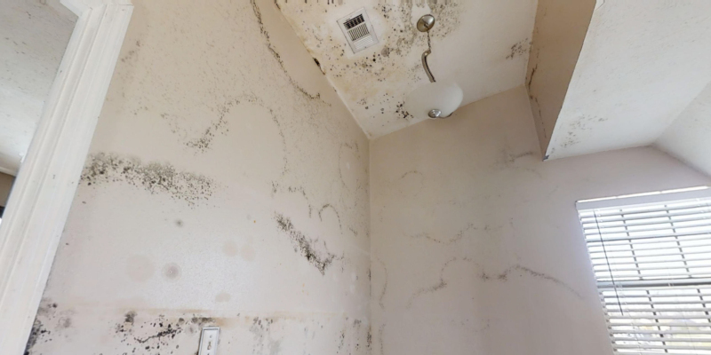 homeowner-driven mold remediation