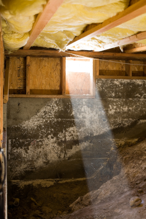 One of those is crawl space mold removal