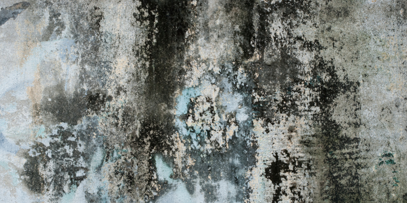 handling blue mold removal