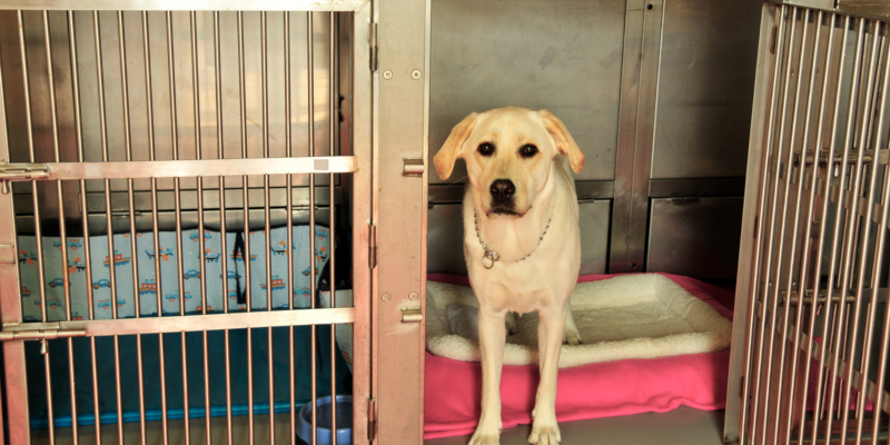 Dog boarding kennels are able to take care of dogs of all ages