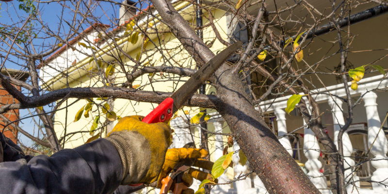 Tree care involves different aspects